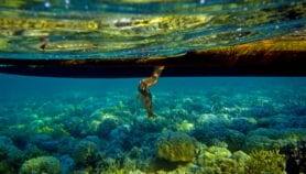 Draft text for small island summit 'lacks science'