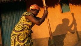 Cassava researchers fold under industry pressure