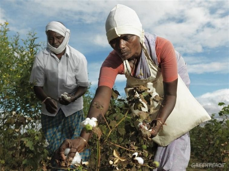 Cotton_Organic_Farmers_Peter Caton_Greenpeace_800x600