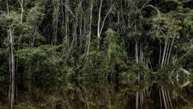Legal tweak could wreck Amazon forest