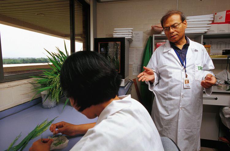Dr. Swapan K. Datta of IRRI