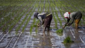 Farmers should drive climate-proofing, report finds