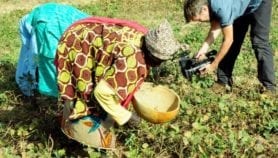 Climate change set to wreck African bean farming