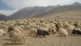 The land of vanishing pastures