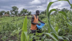 Intensified farming 'rarely' aids wellbeing, environment