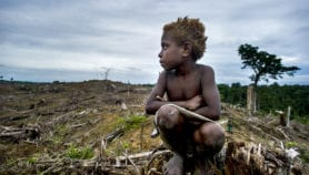 Climate finance failing on forest protection