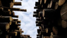 Doubt cast on partial logging's climate mitigation role