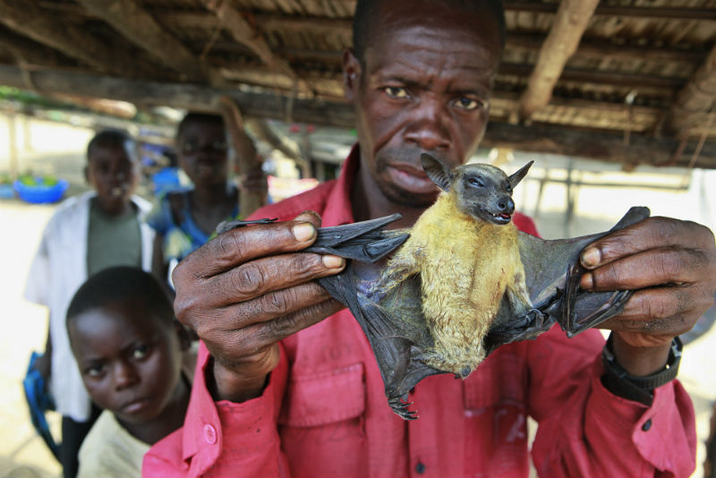 Man sells bats in a market at a village near Kikwit
