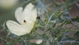 Indonesian herbarium goes digital