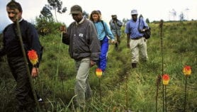 Conservation gets low share of tourist income