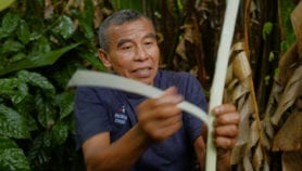 Farming in the forest in Belize