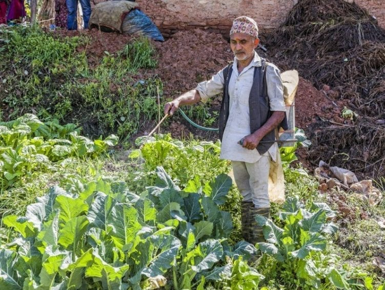 A man sprays fermented cow urine, an effective fertiliser and natural fungicide, on his crop. Since such innovations were introduced, farmers in this smart village have been phasing out artificial fertilisers and pesticides