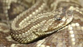 Snakebite resolution set for Health Assembly approval