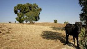 Soil erosion may threaten global food security