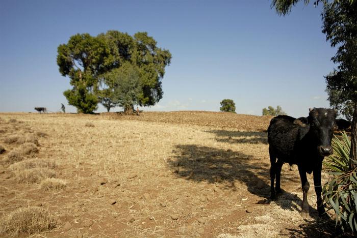 Soil parched SDGs agri.jpg
