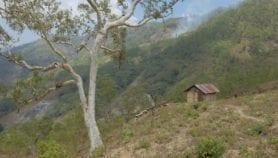 How better seeds make Timor-Leste climate resilient