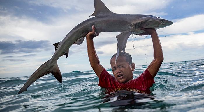 Pacific fish migration