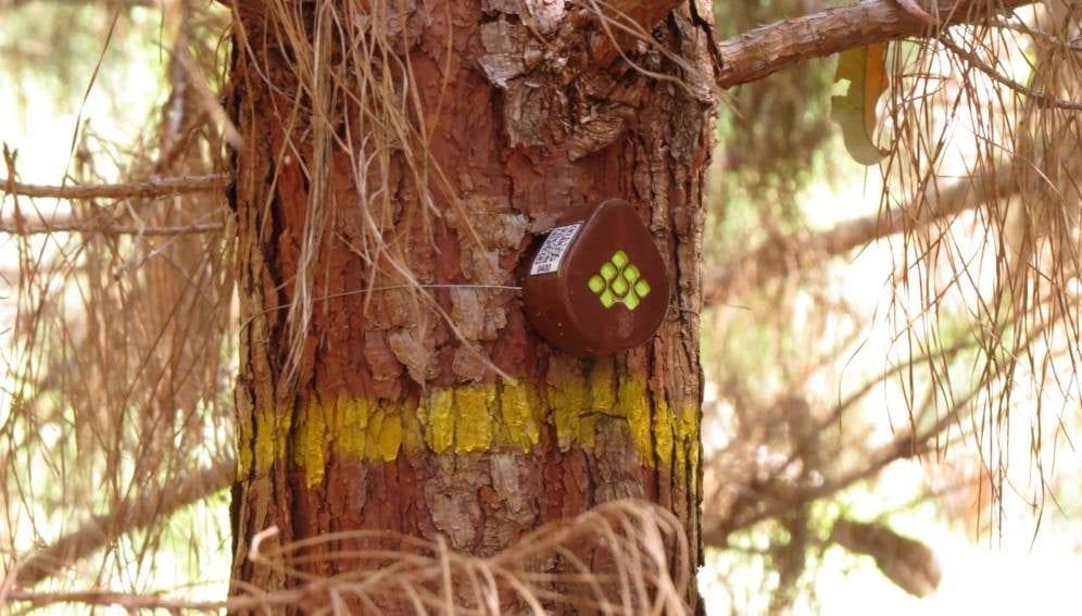 Tree Sensors - MAIN