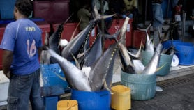 Decision to increase bigeye tuna catch limit criticised
