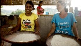 Fortified rice raises risk of hookworm infections