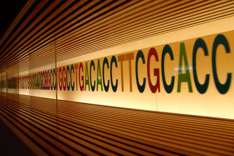 Egyptian Genome