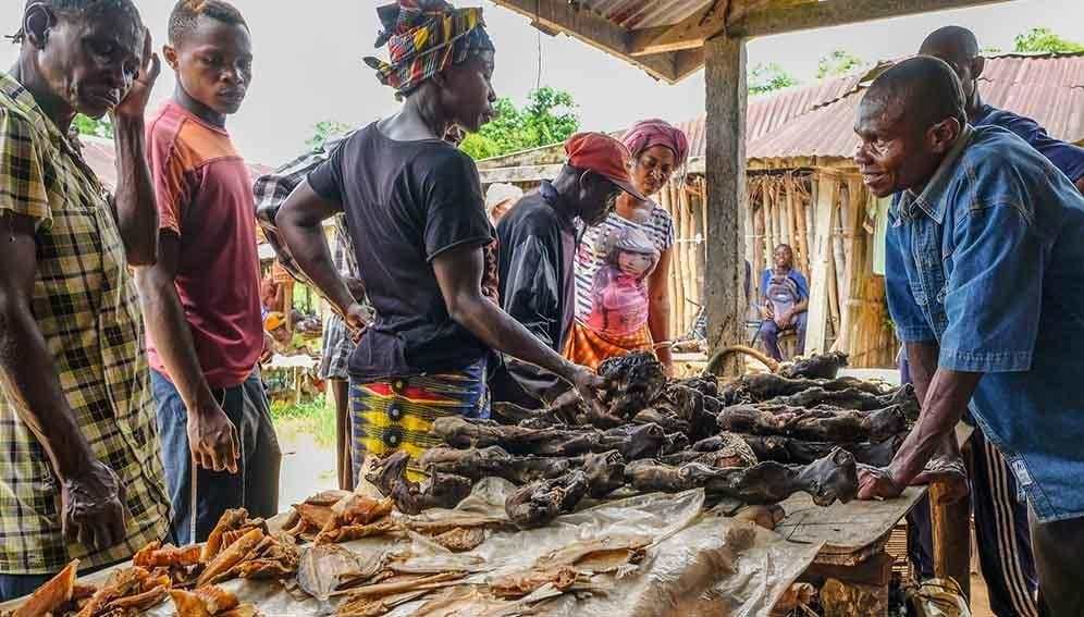 Bush Meat Market - MAIN