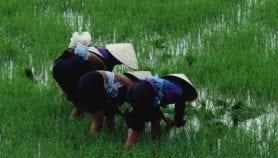 'Alarming' use of critical human antibiotics on crops