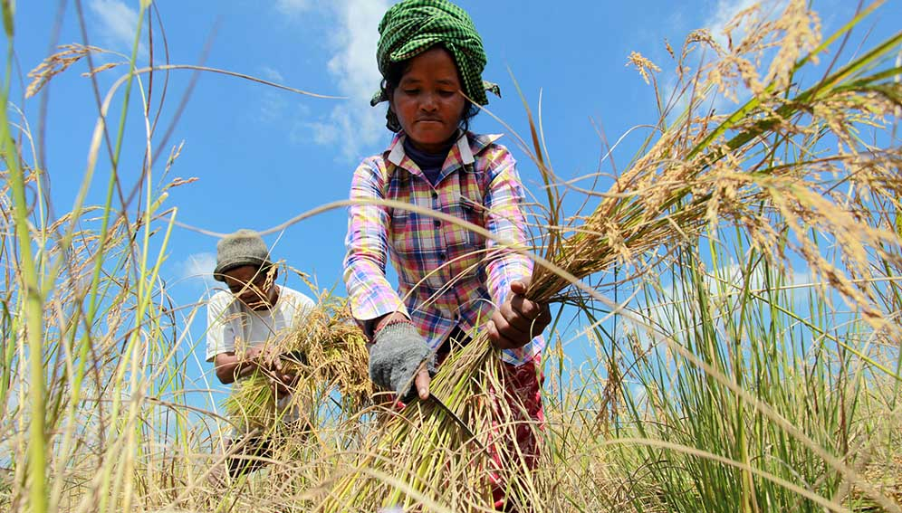 Create open data culture to feed hungry world – experts