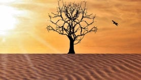 'Respect dirt and dung'  to combat desertification