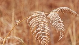 Dried, pressed plants predict climate future