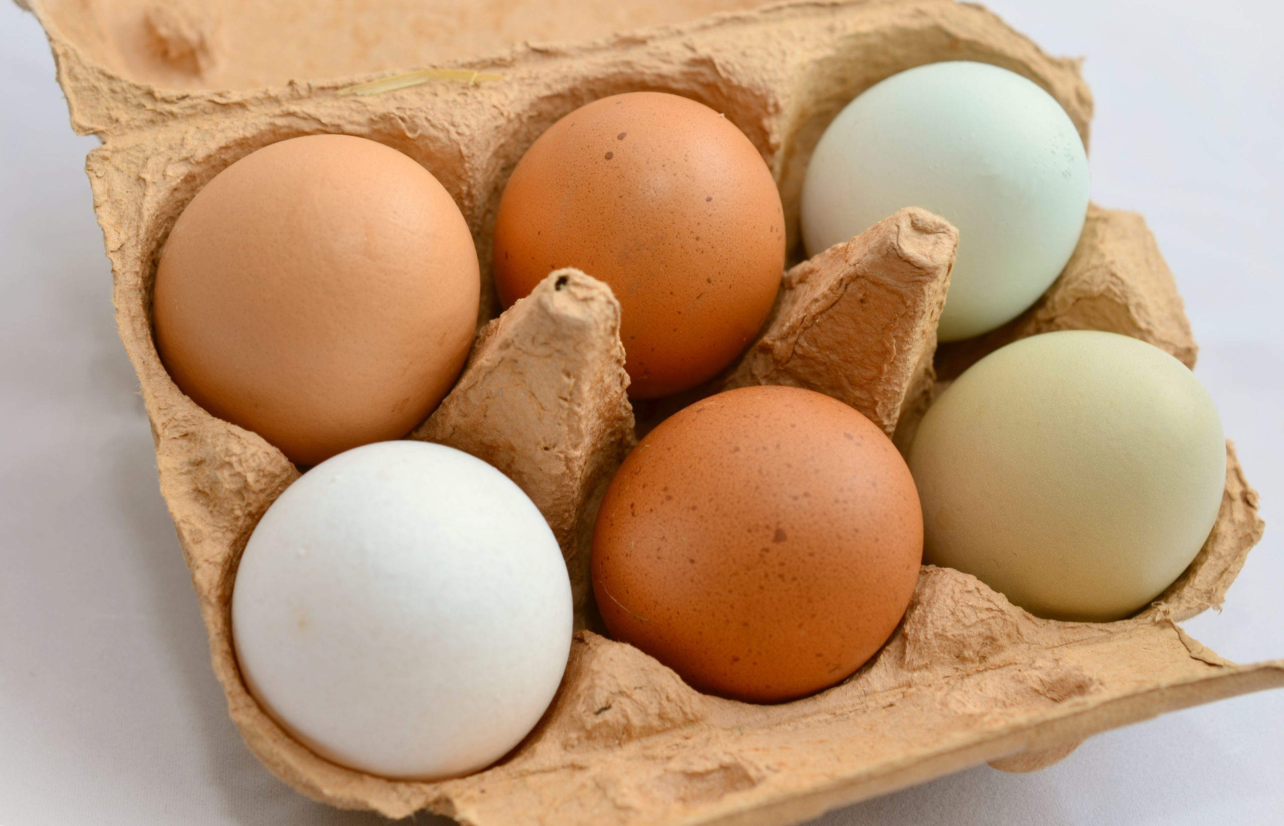 Protective bio-shell could extend egg shelf life