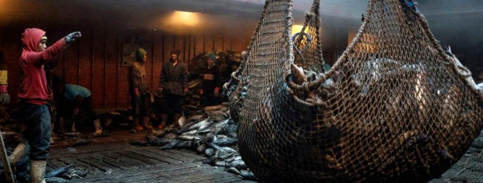 flota pesquera1