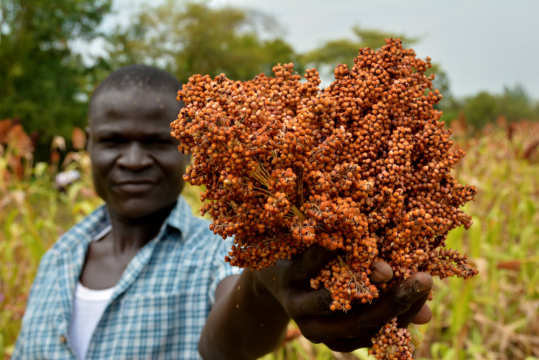 Tap digital solutions to transform Africa's agriculture