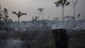 Nature losses threaten emerging economies