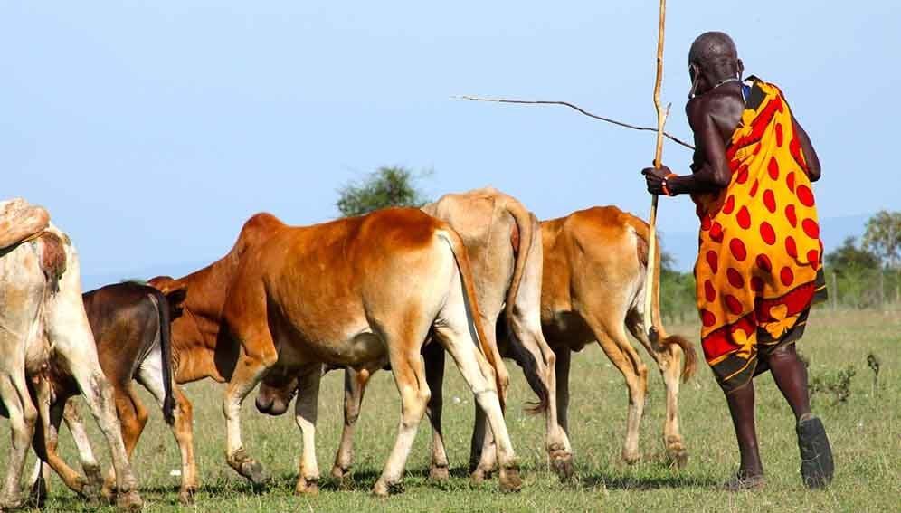 Livestock - zoonotic