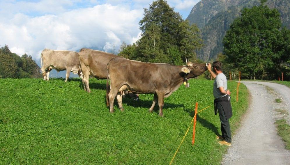 Farmer holds cow