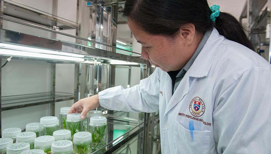 Plant tissue culture facility - main