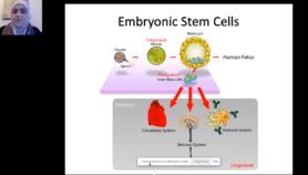 أوان سن قوانين لأخلاقيات الخلايا الجذعية