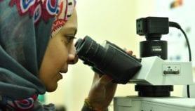 ربط جامعات مصرية بأمريكية