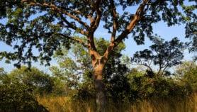 حول العالم العربي.. زراعة الغابات فرصة تنموية