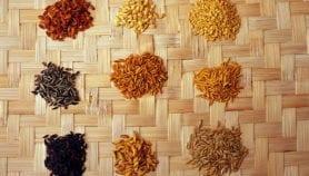 دور العلم في إنتاج غذاء متنوع ومغذ