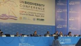 'البصمة الوراثية'.. خلاف بلا حسم في مؤتمر التنوع البيولوجي