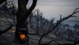 خضراء كردستان العراق احترقت