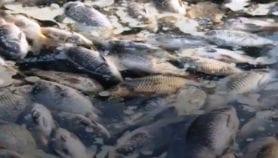 حديث المؤامرة يكتنف نفوق أسماك فرات العراق
