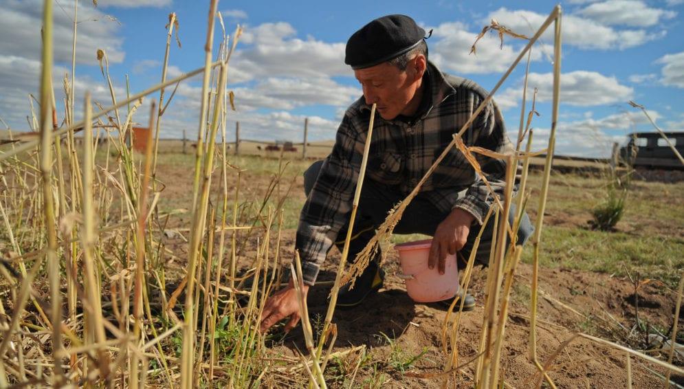 cultivating farmer-main