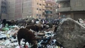 تجريب منظومة إلكترونية لرصد القمامة وإزالتها في مصر