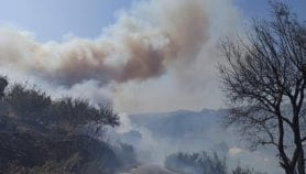 حرائق الغابات زادت سبل العيش في سوريا ضيقًا