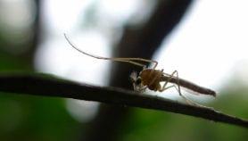 الهاموش نذير الكوليرا