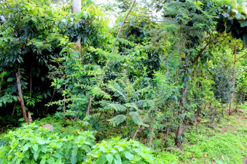 An assortment of indigenous trees at Kinyanjui's home in Runda estate, in Nairobi. He says all trees were replanted from seeds obtained from the same piece of land.