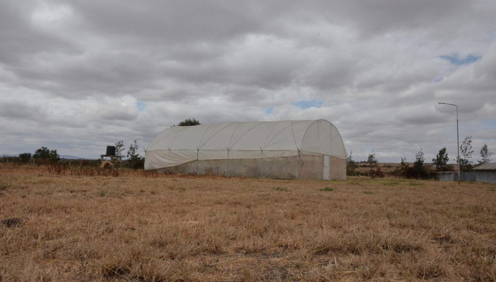 Greenhouse farming in Kitengela, Kenya